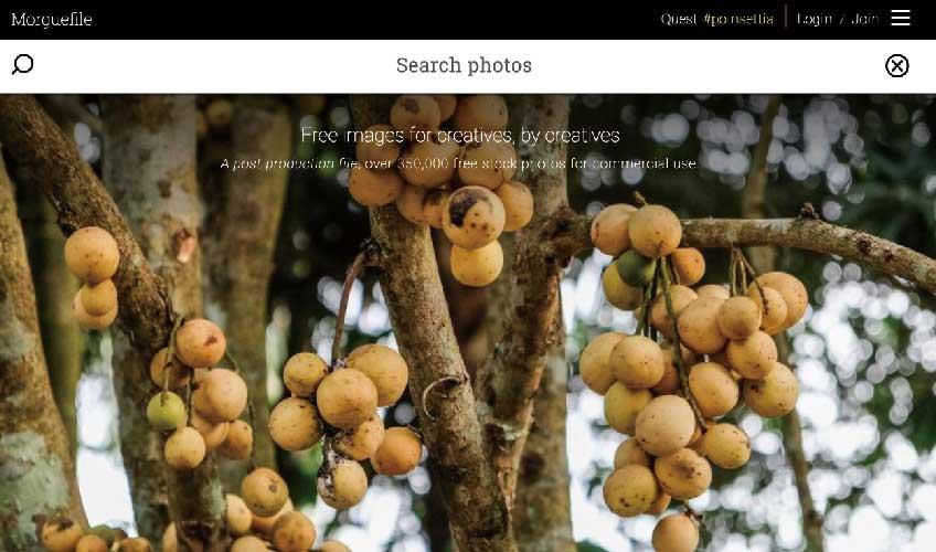 WEBデザインに使える商用無料の写真素材サイト:morgueFile